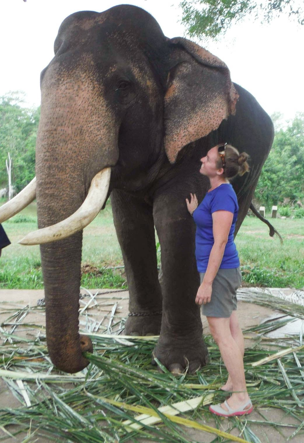 Wayfinder Ali with bull elephant in Thailand