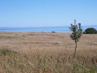 View from American Camp, San Juan Island