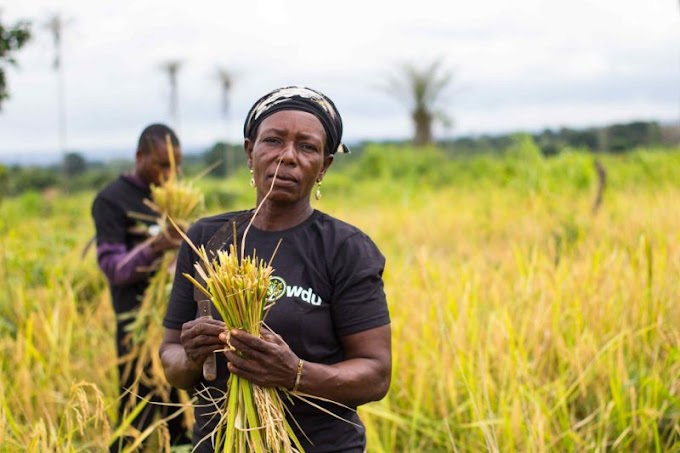 FarmCrowdy raises $1M round to bring Nigerian farmers online and to market