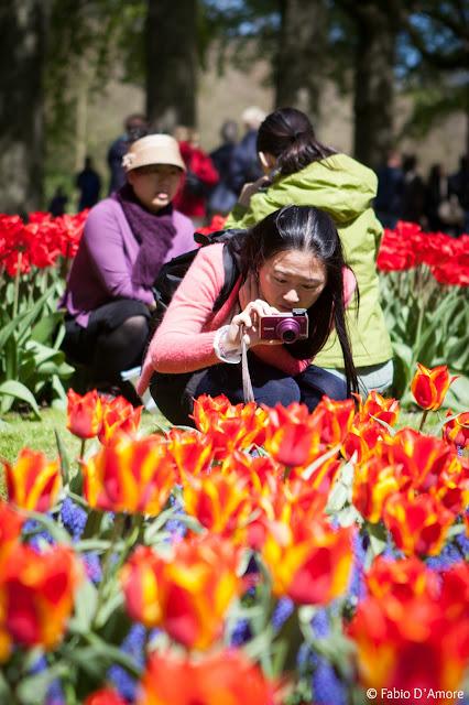 Tulipani al parco Keukenhof