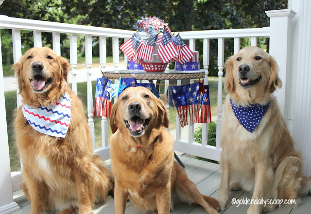 patriotic 4th of July dogs dressed up in red white and blue