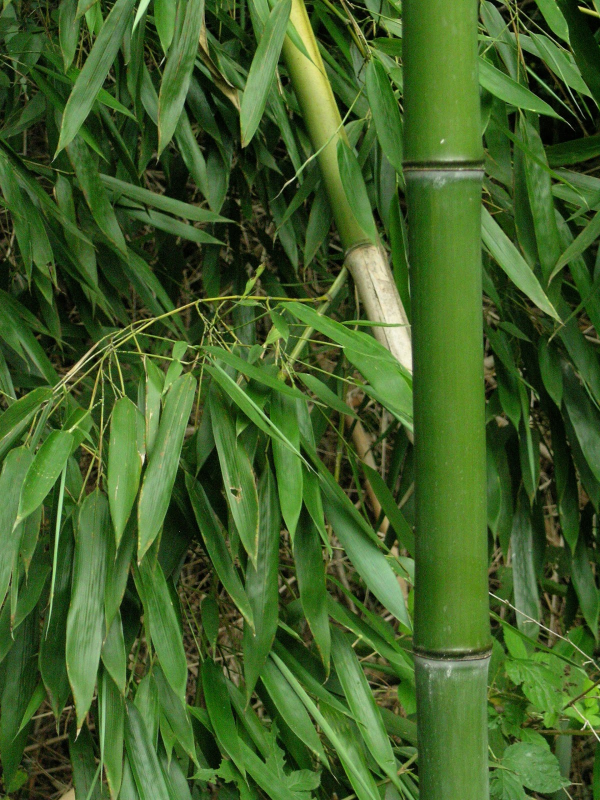 Bamboo dating website