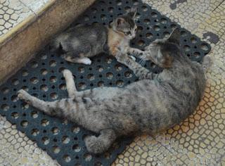 Induk dan anak kucing