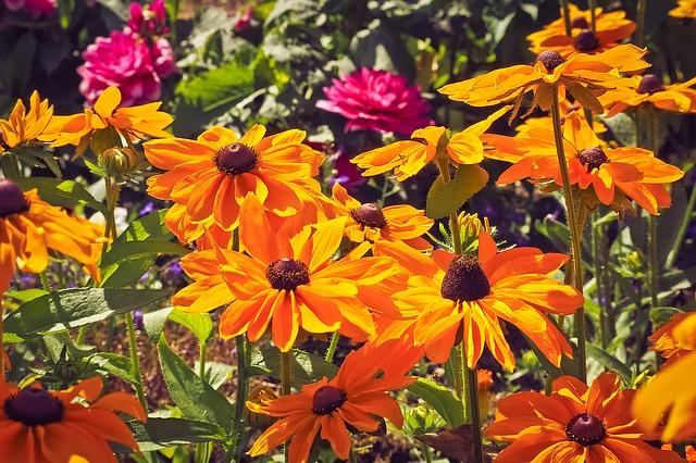 hinh anh dep hoa da quy