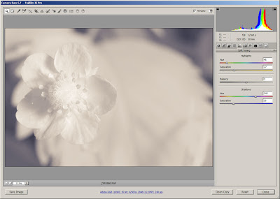 Processing split toned infrared flower photo in Adobe Camera RAW (ACR)