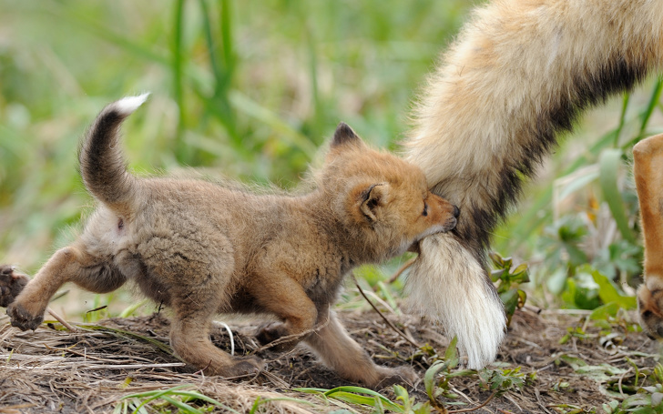 21 Animals That Became The Best Mothers Ever