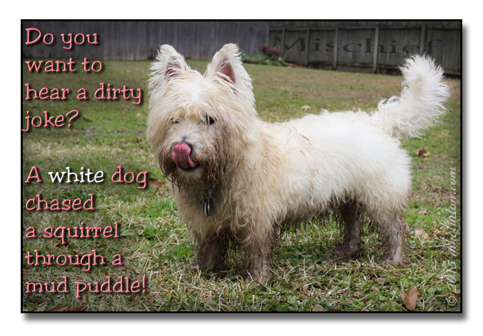 Dirty joke about a white dog in a mud puddle