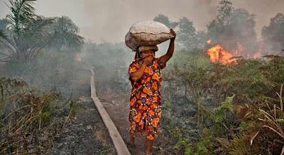 Kebakaran hutan di Indonesia - berbagaireviews.com