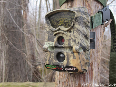 Night vision trail cameras provide insight into the types of predators around the chicken coop.