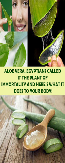 ALOE VERA: EGYPTIANS CALLED IT THE PLANT OF IMMORTALITY AND HERE'S WHAT IT DOES TO YOUR BODY!