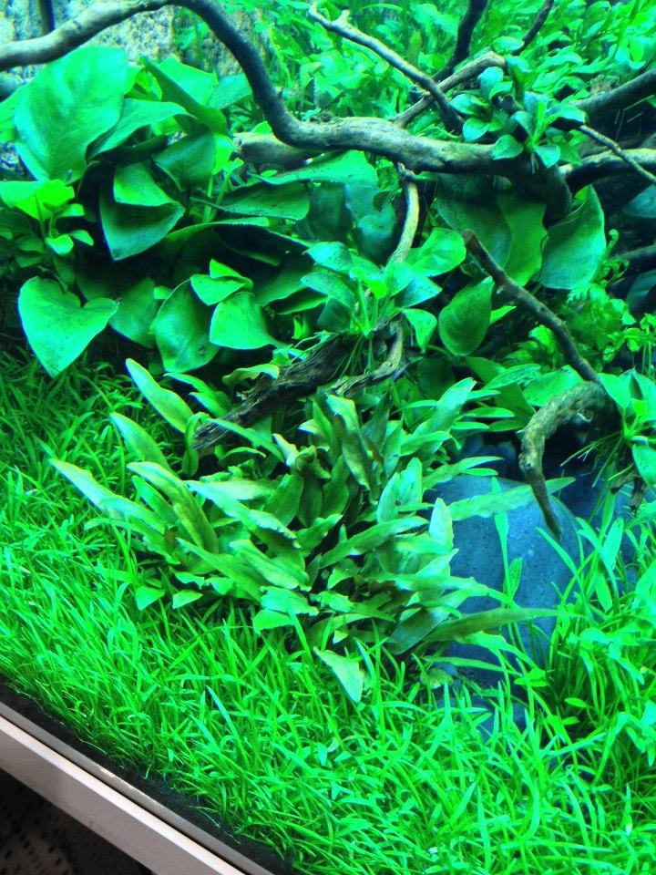 fische sofort ins neue aquarium