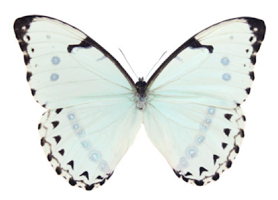 Butterfly from The Evolution