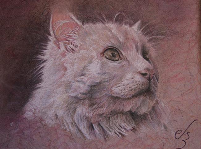 Retrato cuadro de gato persa blanco