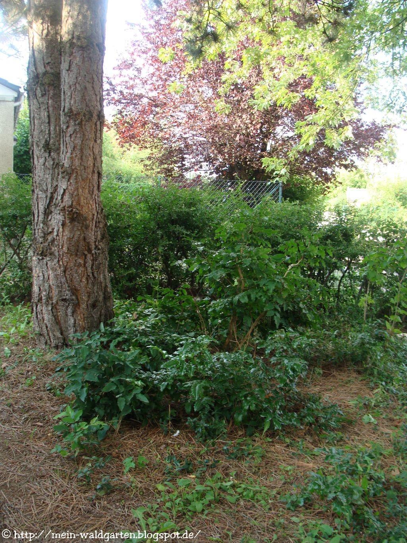 mein waldgarten warum bodendecker pflanzen. Black Bedroom Furniture Sets. Home Design Ideas