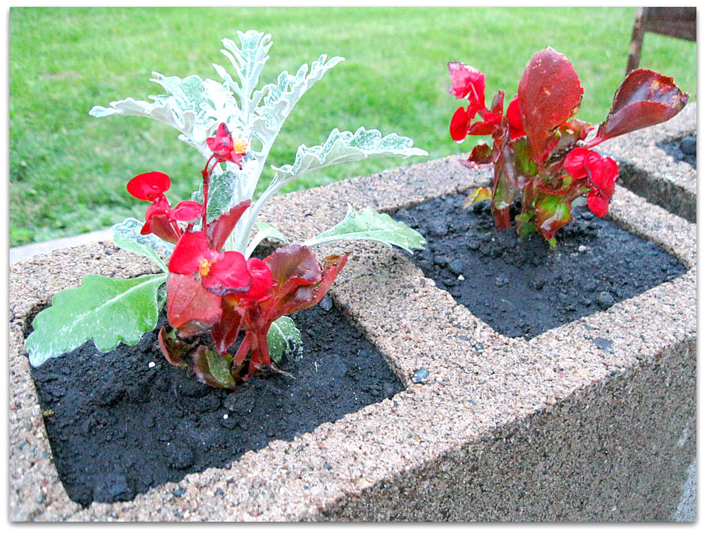 Eightymillion & DIY Instant Flower Pots Using Recycled Cement Bricks - Eightymillion