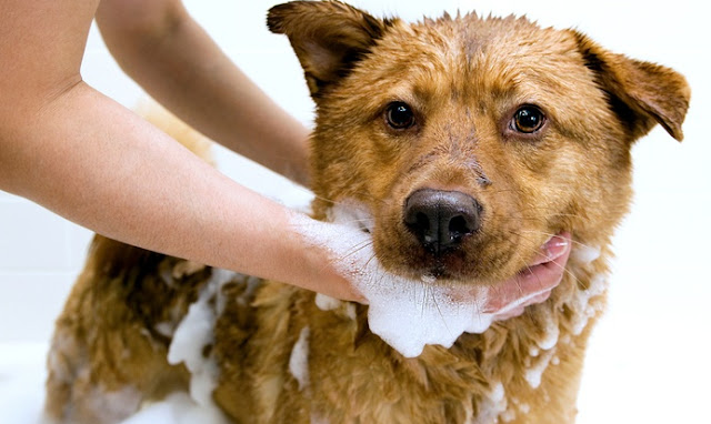 Dog Dry Skin Remedy