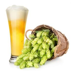 Beer-hops-291x300