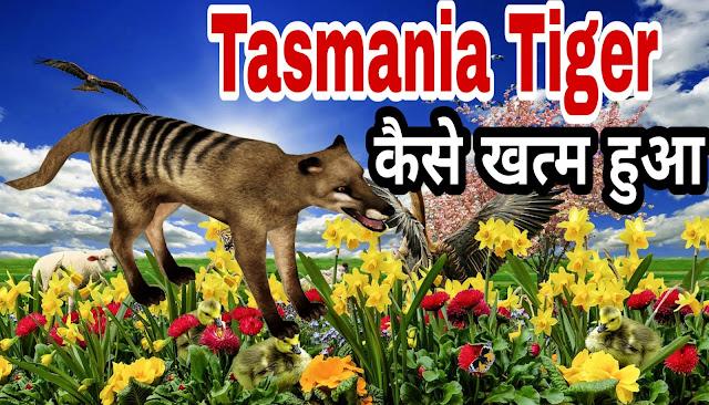Tasmania Tiger Facts/ Information about Tasmanian Tiger / Tasmanian Wolf कैसे ख़त्म हुआ ?
