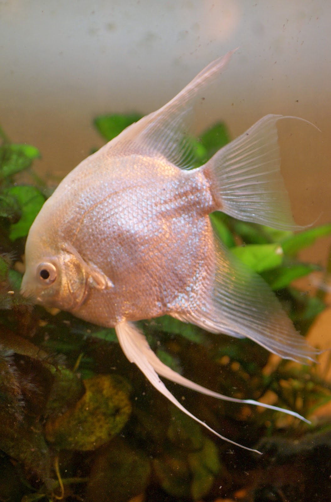 Blok888: Top 10 Most Beautiful Freshwater Fish in the world 2