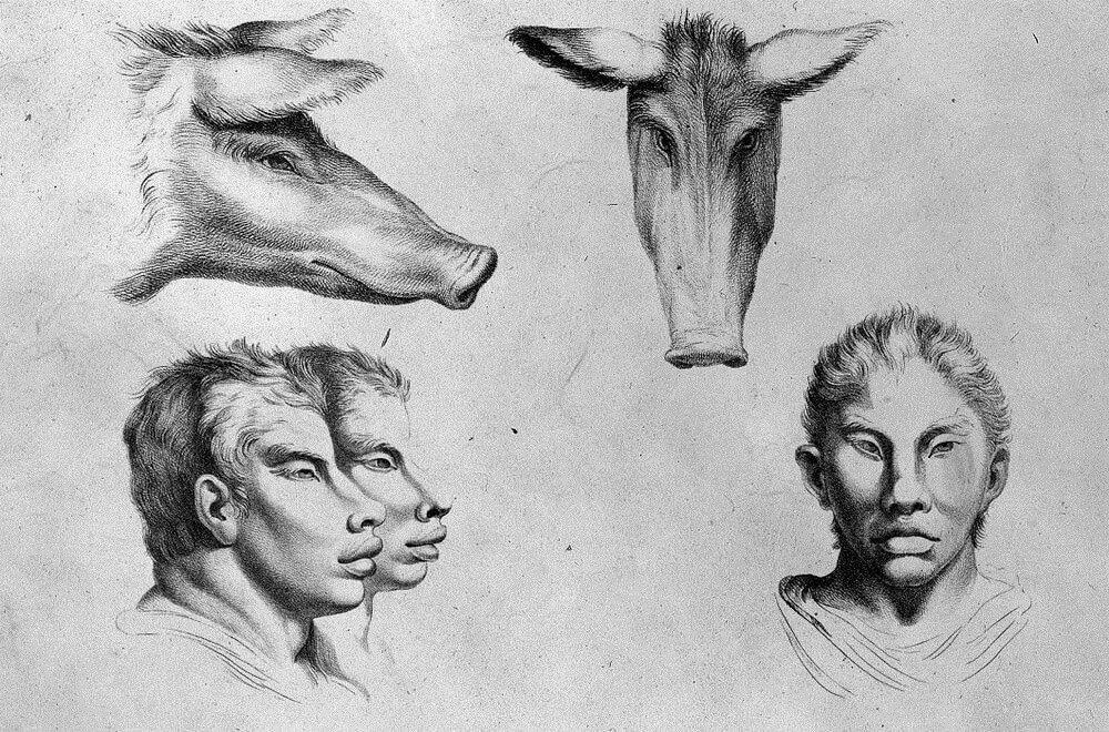 08-The-Pig-Animal-Transformations-Drawings-from-the-1600s-www-designstack-co