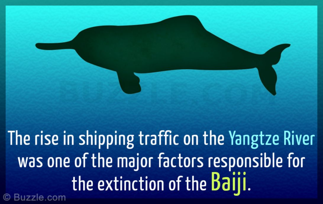 The Real Causes of Extinction of the Yangtze River Dolphin Baiji