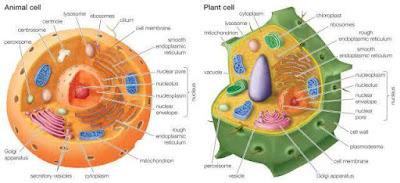 Soal Biologi : Materi Sel Lengkap + Kunci Jawaban
