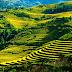 Ruộng bậc thang tác phẩm vùng núi hùng vĩ tuyệt đẹp của nước Việt Nam