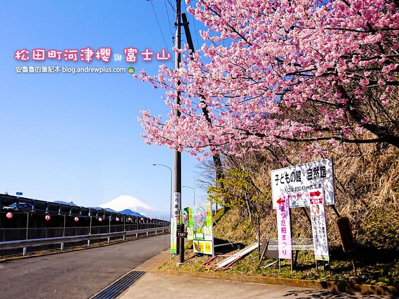 matsuda-sakura-h.jpg