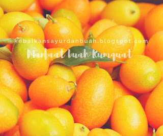 buah Kumquat yang sudah dipanen