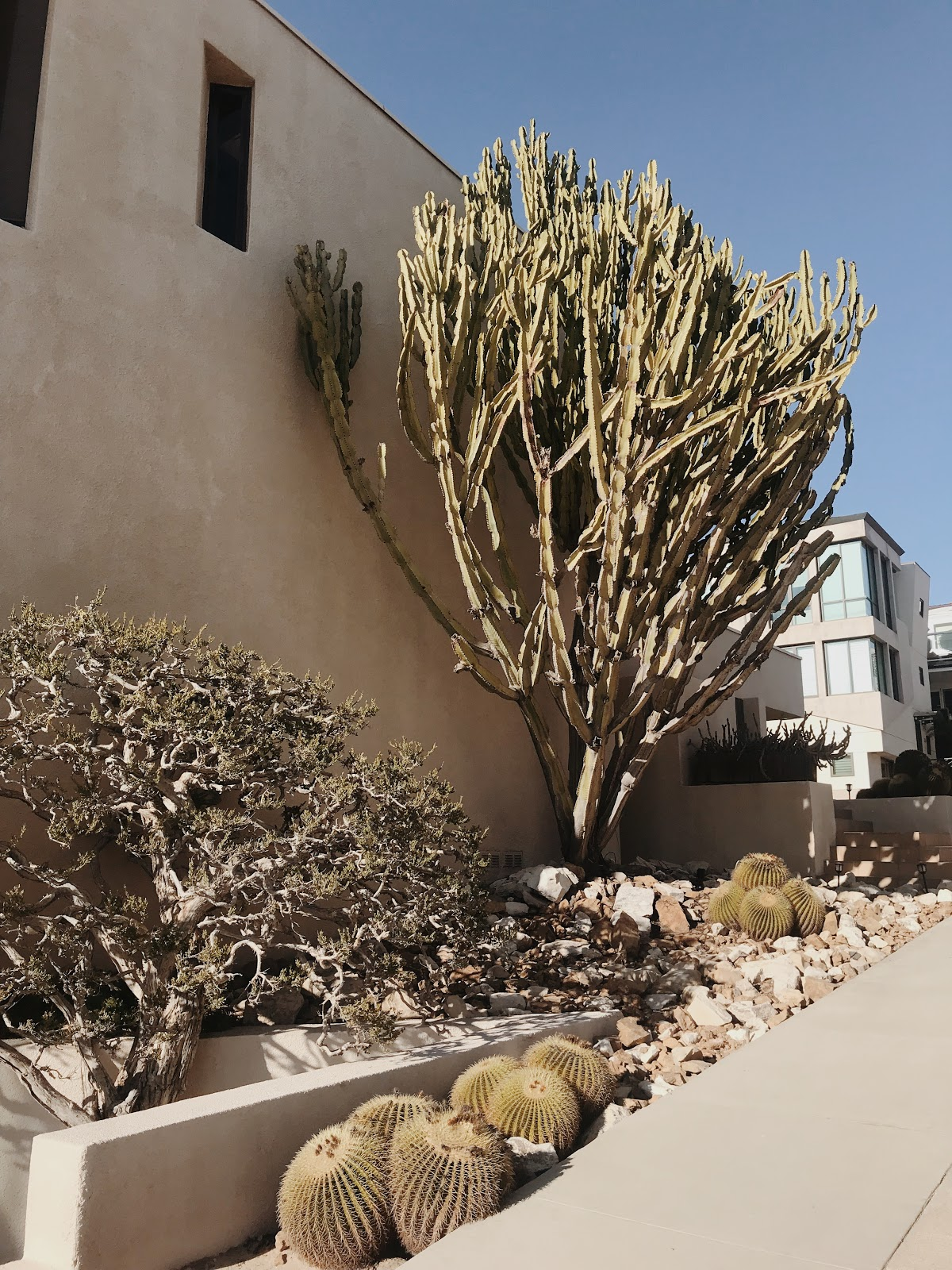 California landscaping with cacti  | Love, Lenore