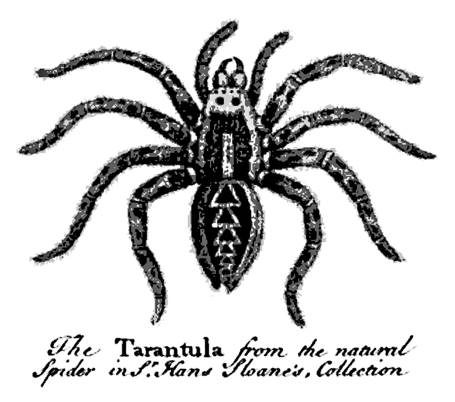 Old Vintage Designs Free Vintage Spider Illustrations
