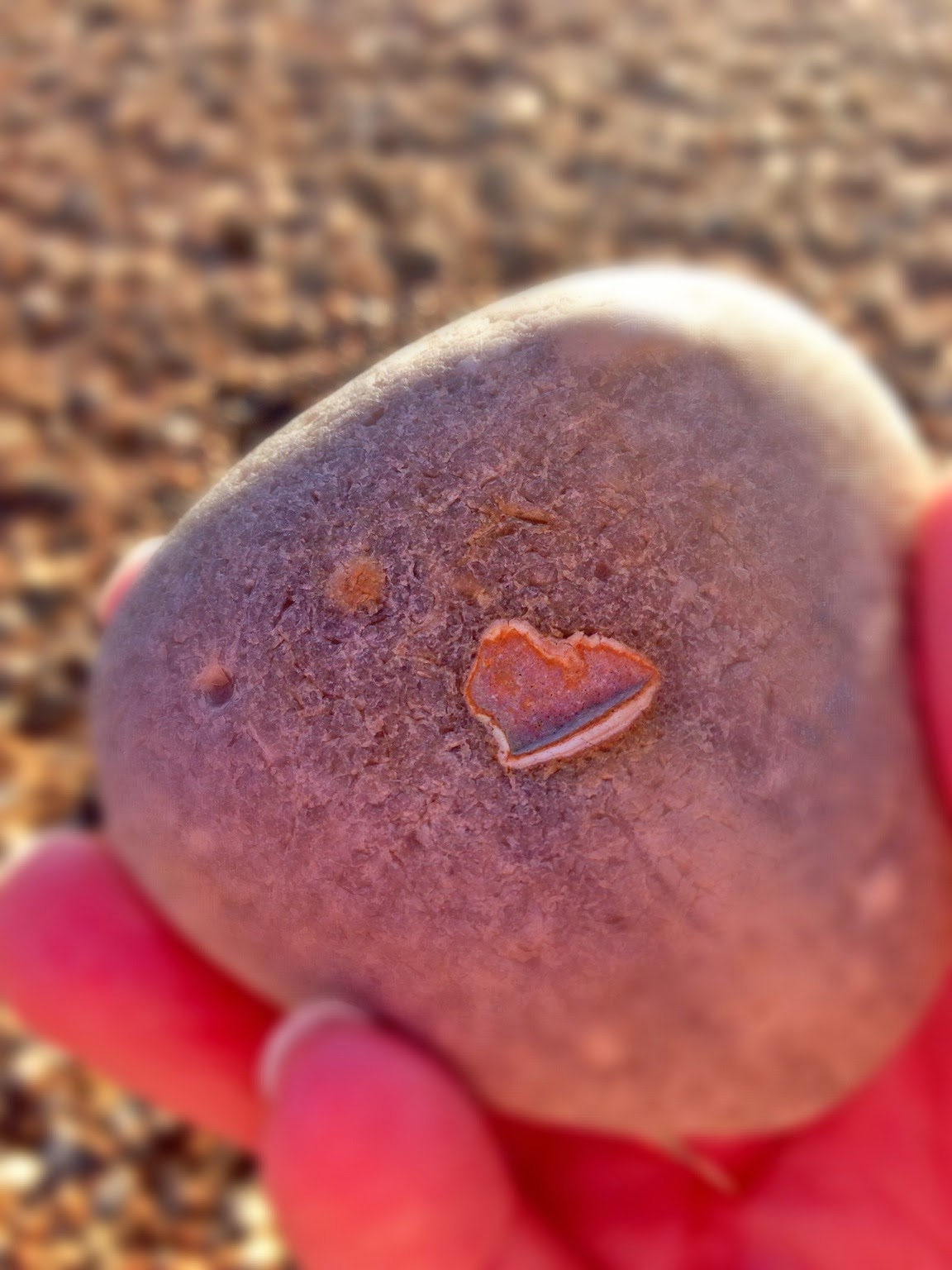 Close up Brighton beach heart #heartsfoundallovertheplace