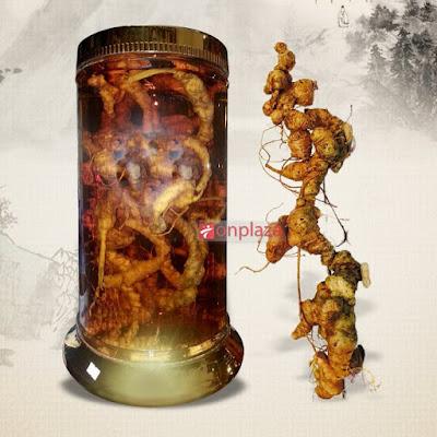 Bình rượu sâm Ngọc Linh đặc biệt