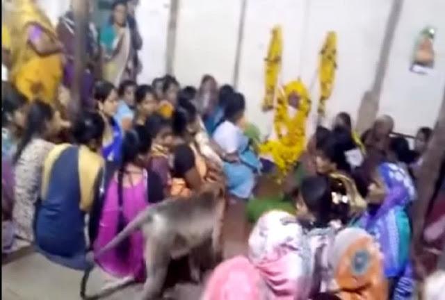 जब श्रद्धांजलि सभा में पहुंच गया बंदर, महिलाओं के साथ करने लगा यह काम