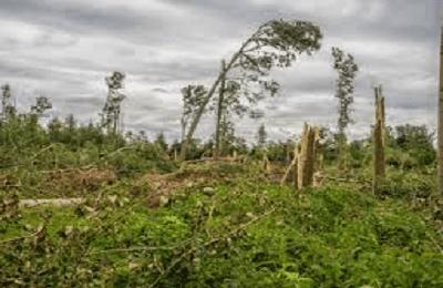 Kumpulan puisi tentang hutan yang rusak