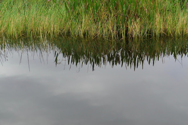 Water and grass at Green Cay Nature Center in Boynton Beach