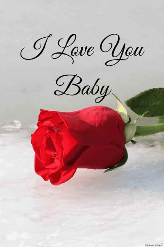 i love you baby with red rose hd pic