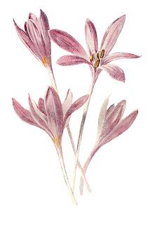 flower wildflower floral image clipart digital download botanical art