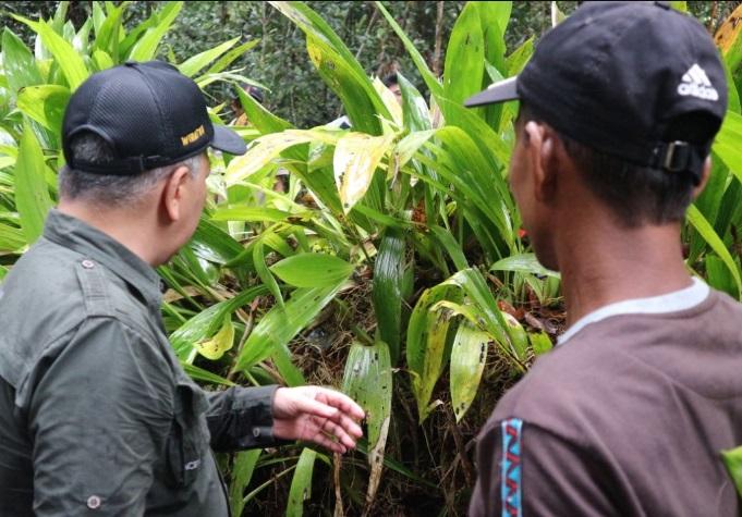 Masyarakat Lokal Kapuas Hulu Miliki Gagasan Lestarikan Anggrek di Desa Vega