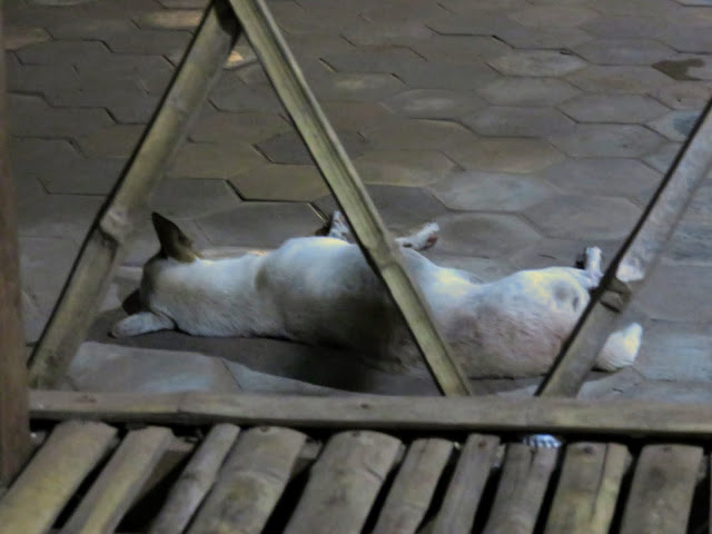 Cambodian dog in Siem Reap