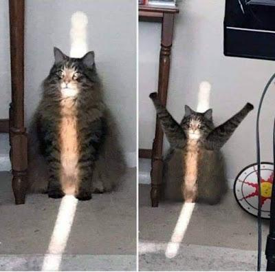 Funny cat sun praise picture
