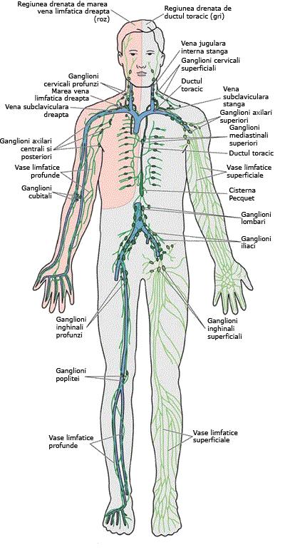 drenarea limfatică pentru a pierde în greutate