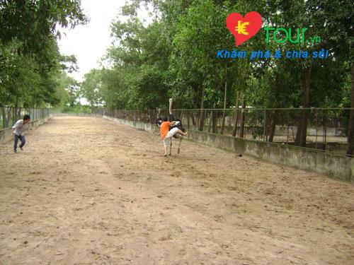 Cưỡi đà điểu ở khu du lịch Vườn Xoài