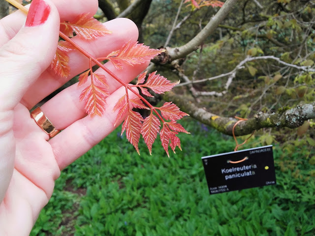 hojas en el jardin botanico de edimburgo