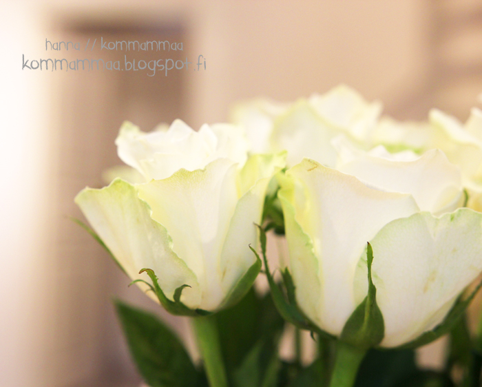 valkoinen ruusu kimppu kukka