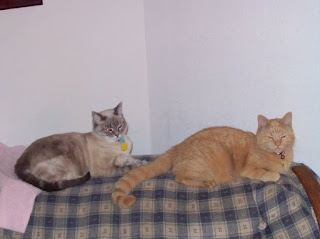 Milita and Carmine lay near each other on our first couch.
