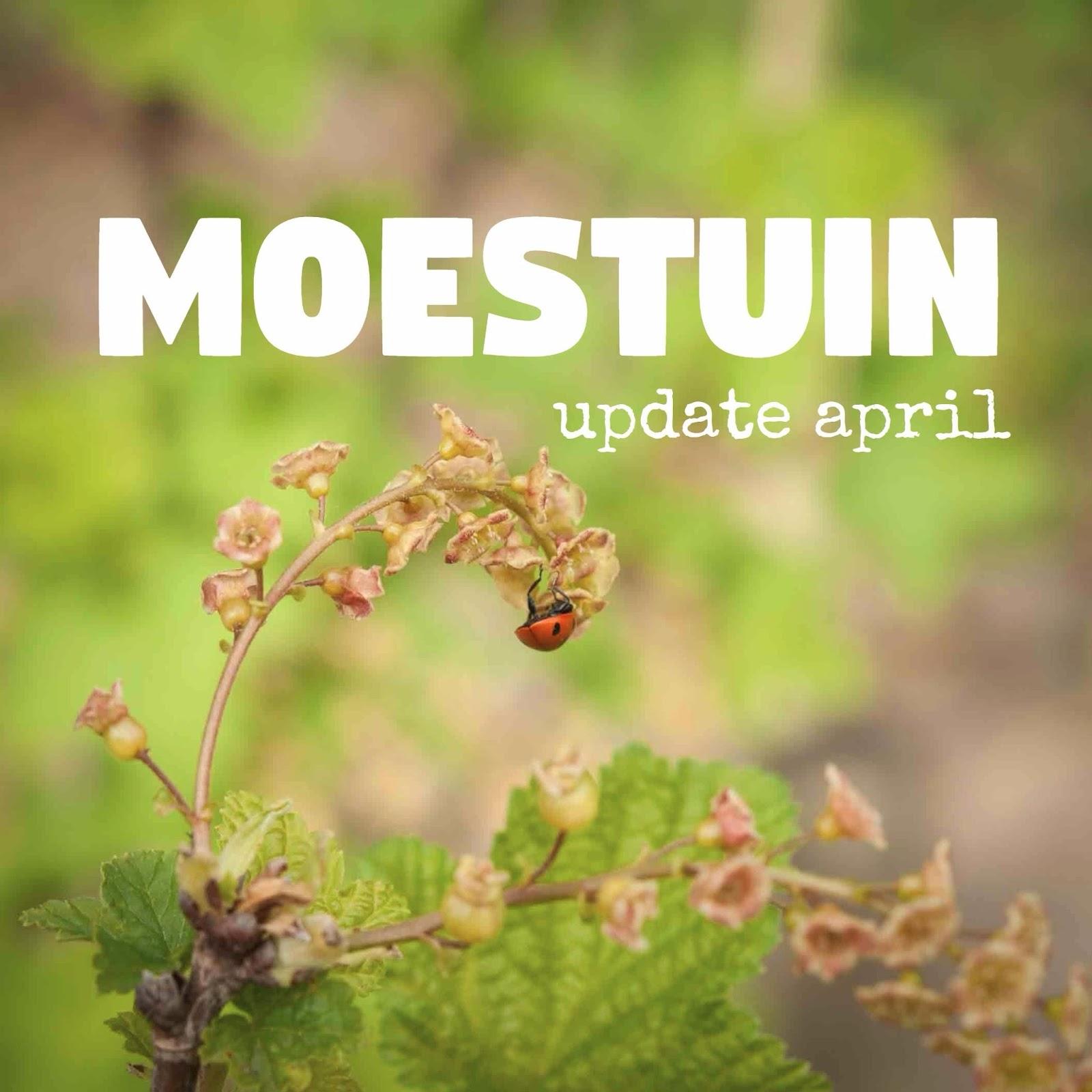 april moestuin lente update