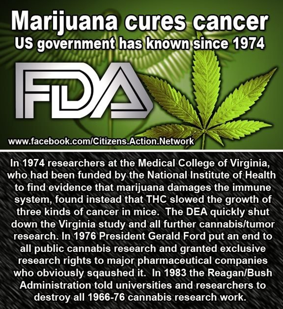 Image result for marijuana cancer cure