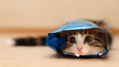 comment emballer son chat pour noel