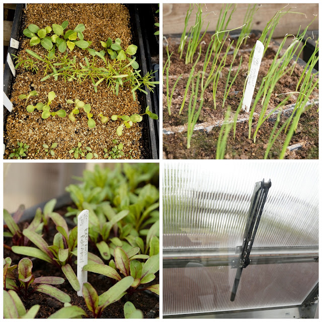 seedlings - 'growourown.blogspot.com'